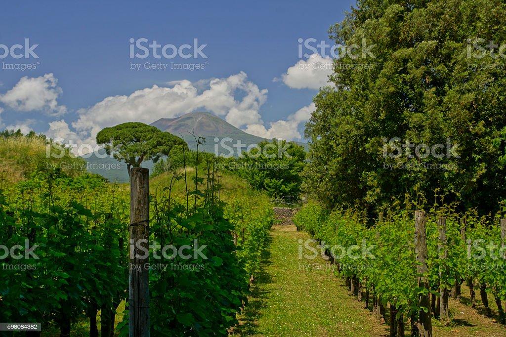 Italian Vineyard near Pompeii with Mt. Vesuvius stock photo