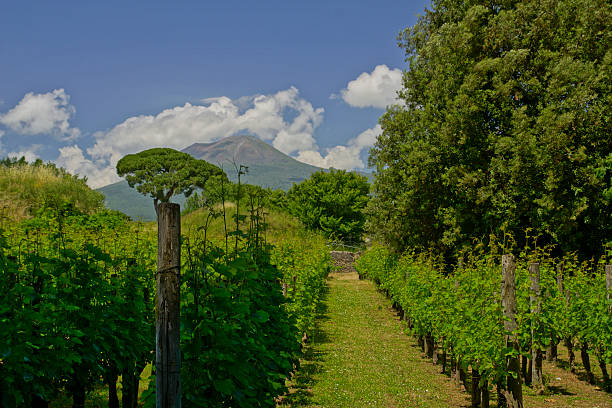 Italian Vineyard near Pompeii with Mt. Vesuvius – Foto