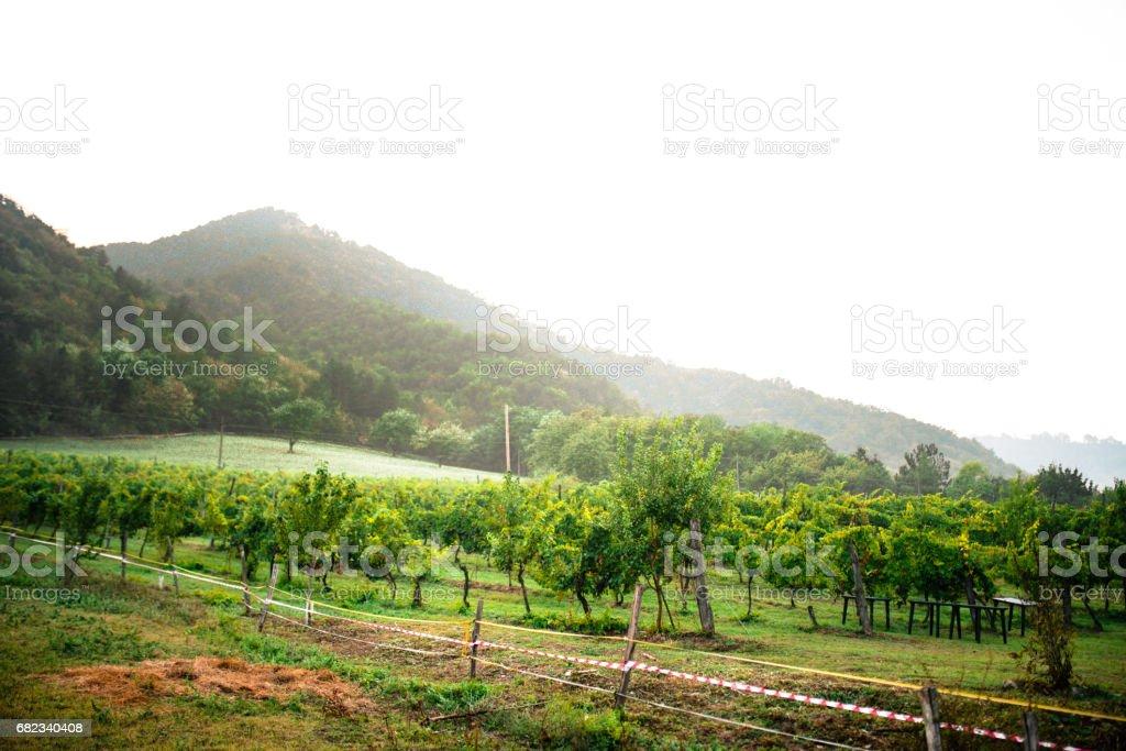 italiensk vingård royaltyfri bildbanksbilder