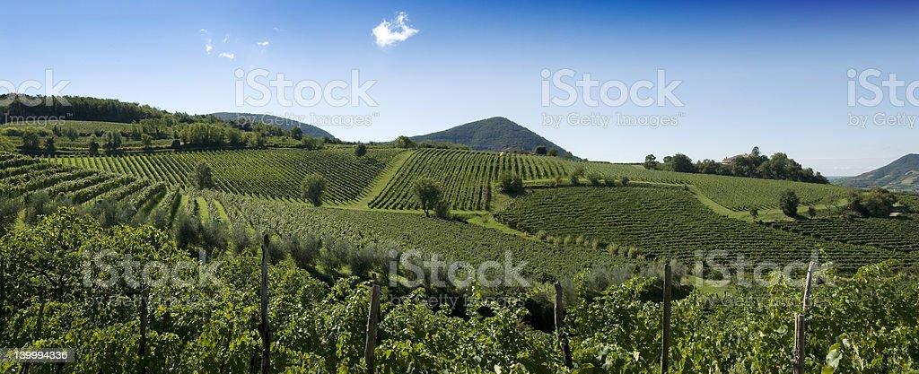 Italian Vineyards Panorama stock photo