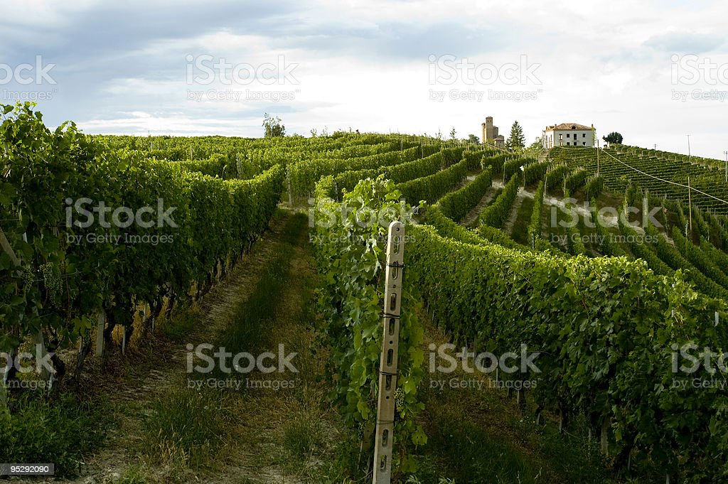 Italian vinyard royalty-free stock photo