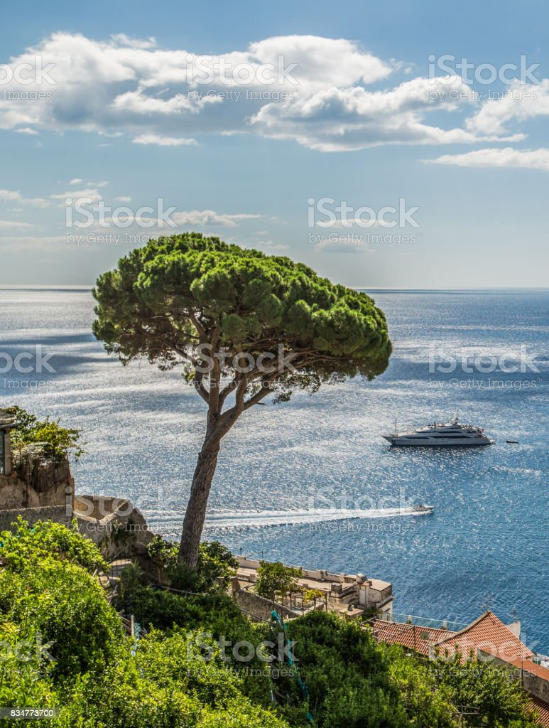 Italy - Parasol Pine By The Sea stock photo
