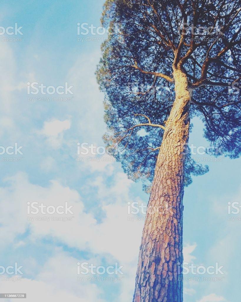 Italien Baum bei Sonnenuntergang – Foto
