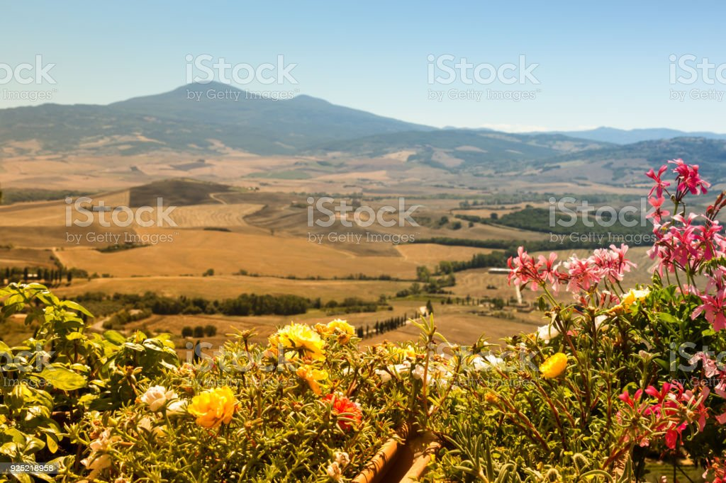 Italy, Tuscany, August 2016, panoramic view of the Val d'Orcia with typical flowers of the Tuscan vegetation in the foreground stock photo