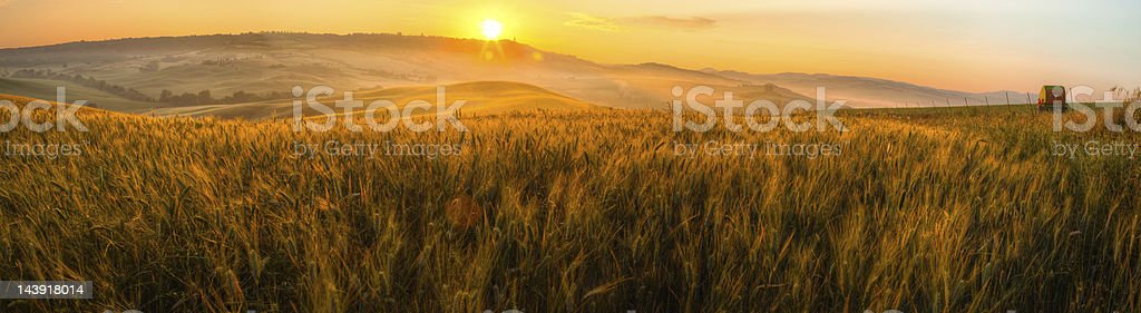 italy tuscany panorama with wheat field and townscape at sunrise royalty-free stock photo