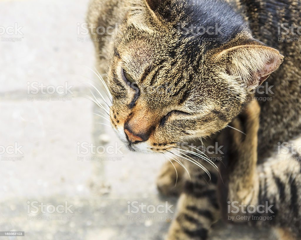 Itching Tabby Cat, Closeup stock photo