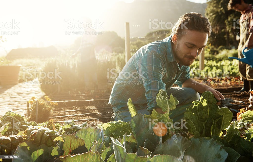 It's a bumper year in our fields stock photo