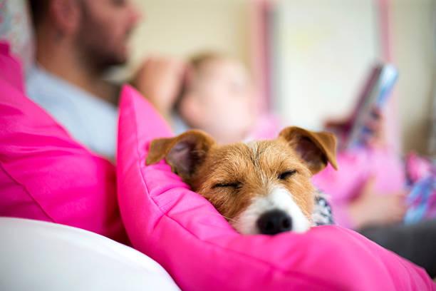 Its a dogs life picture id481761634?b=1&k=6&m=481761634&s=612x612&w=0&h=v76gts0l3xezd 4dqyivsb e4ap1wdtg5ytpp7jjkkw=
