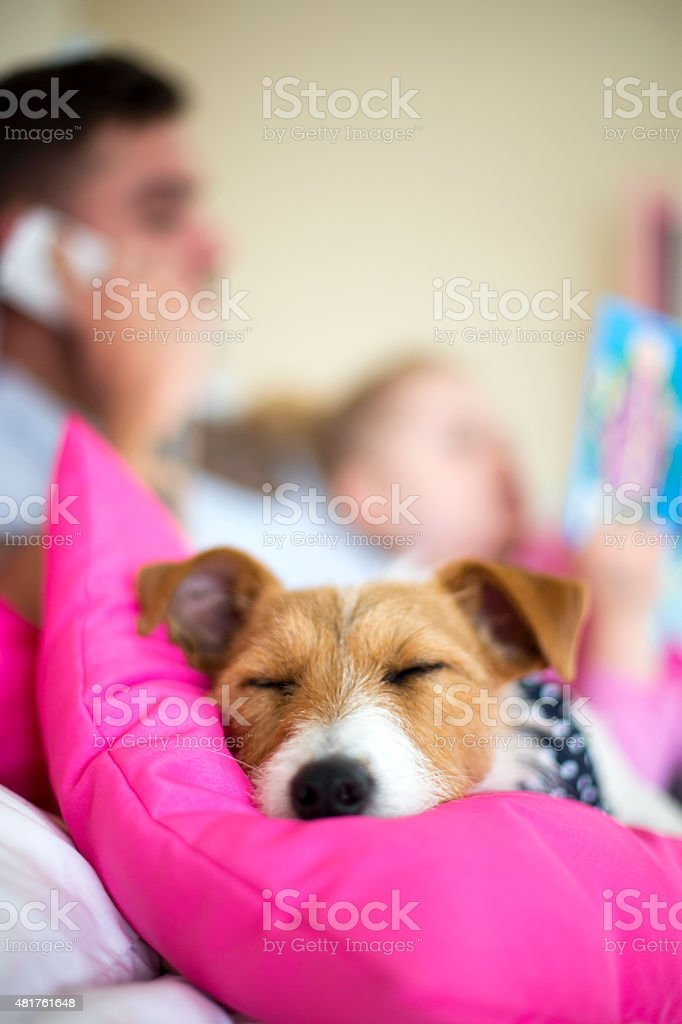 It's A Dogs Life stock photo