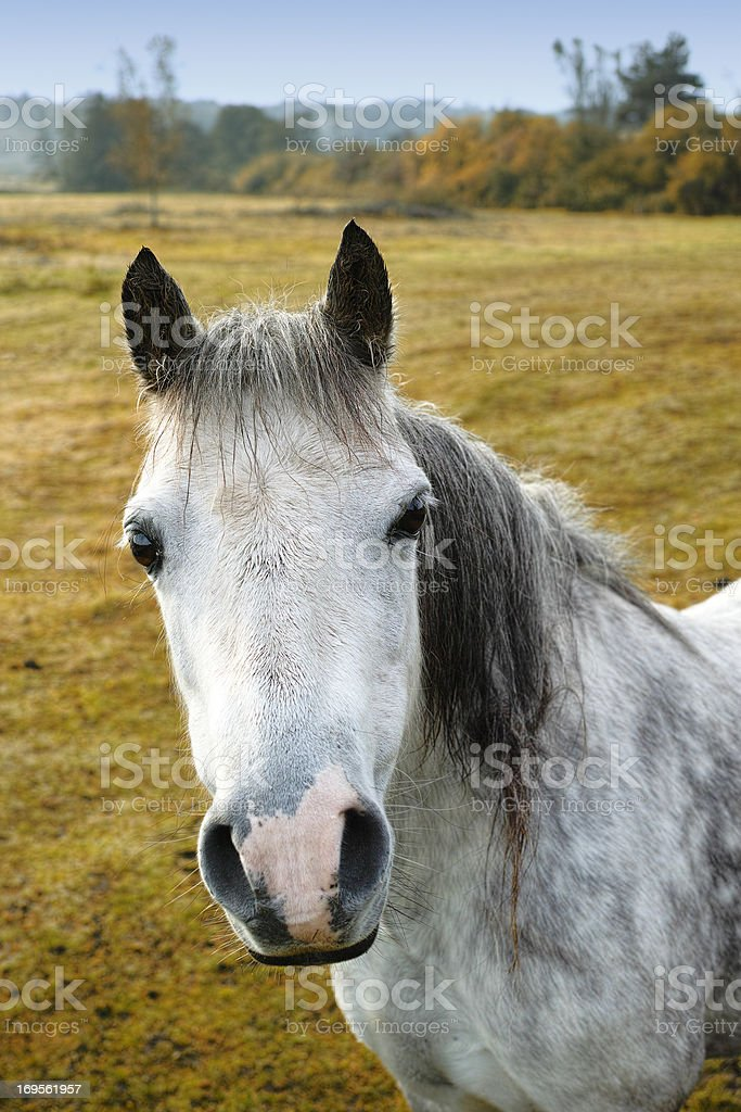 It's a horse's life royalty-free stock photo
