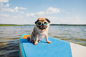 istock it's a paddle board time! 1327654972