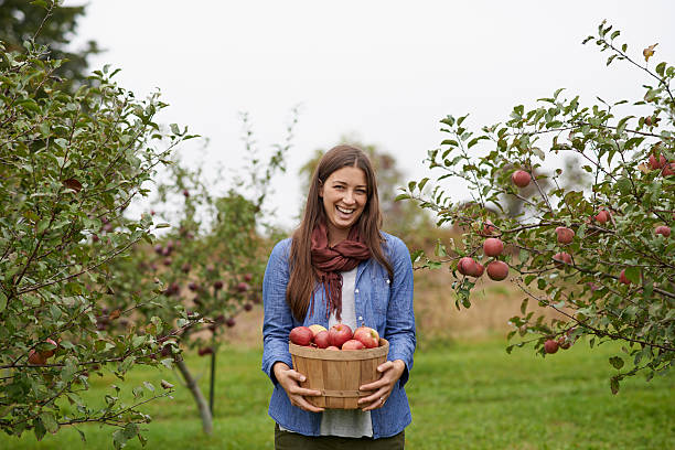 It's apple picking season! Shot of a young woman holding a container filled with freshly picked appleshttp://195.154.178.81/DATA/i_collage/pu/shoots/806057.jpg apple orchard stock pictures, royalty-free photos & images