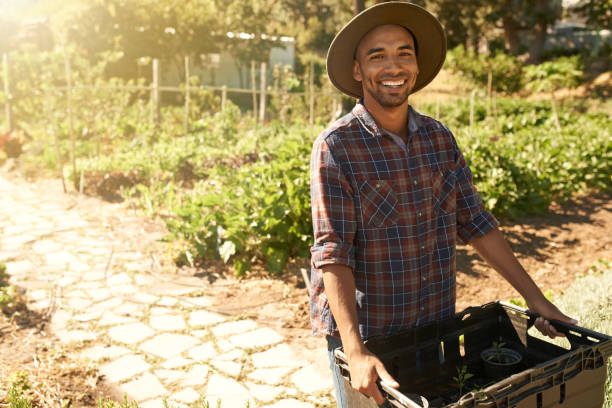 It's been a successful harvesting season Portrait of a young man working in a vegetable garden farm worker stock pictures, royalty-free photos & images