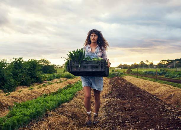 It's been quite a fruitful season Shot of a young woman carrying a crate of fresh produce on a farm homegrown produce stock pictures, royalty-free photos & images