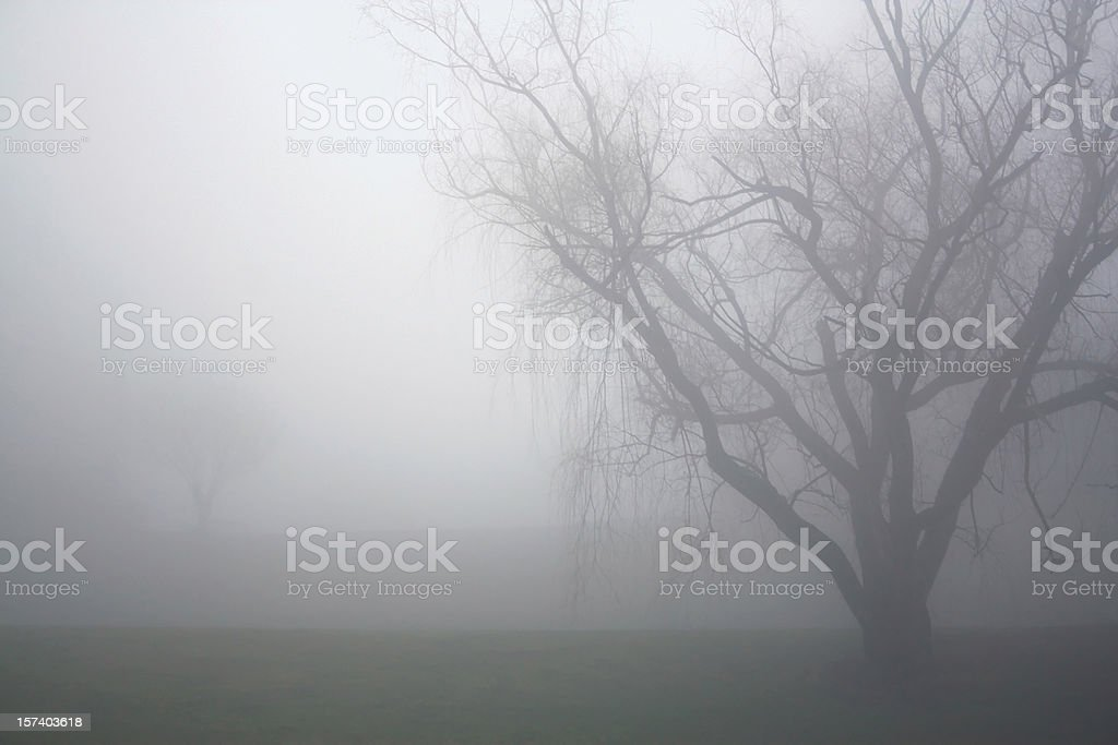 It's Foggy Out royalty-free stock photo