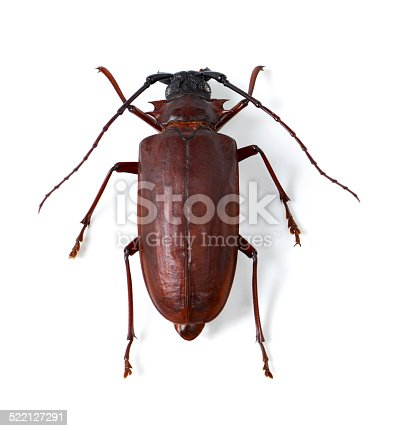 istock It's just a beetle's life 522127291