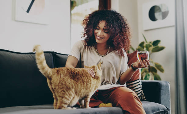 It's just me and you today, kitty stock photo