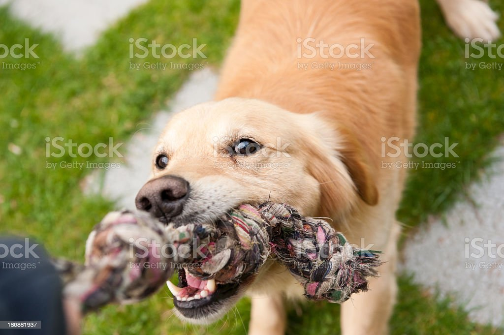 It's mine! royalty-free stock photo