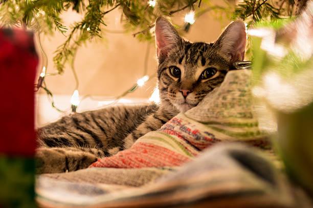 it's my bed - katze weihnachten stock-fotos und bilder