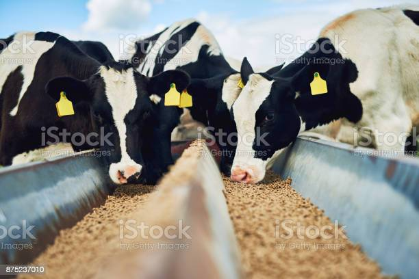 Its only the best for these cows picture id875237010?b=1&k=6&m=875237010&s=612x612&h=4xzwz8e3 jwle3r43fms4osqhv 8akrt1nal0n0eemi=