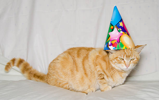 Its Party Time Happy Birthday Stock Photo