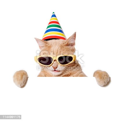 Cat in sunglasses and party hat peeking out of a blank sign, isolated on white. You can add extra white space with your message to the bottom.