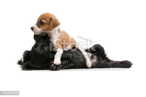 885056264 istock photo it's play time 157427579