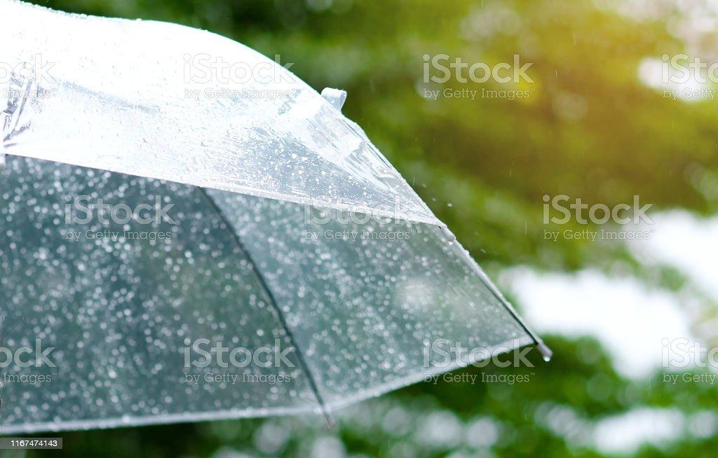 It's raining, Women walk in the rain. Hand of women holding an...
