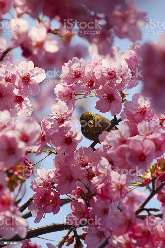 It's Spring! stock photo