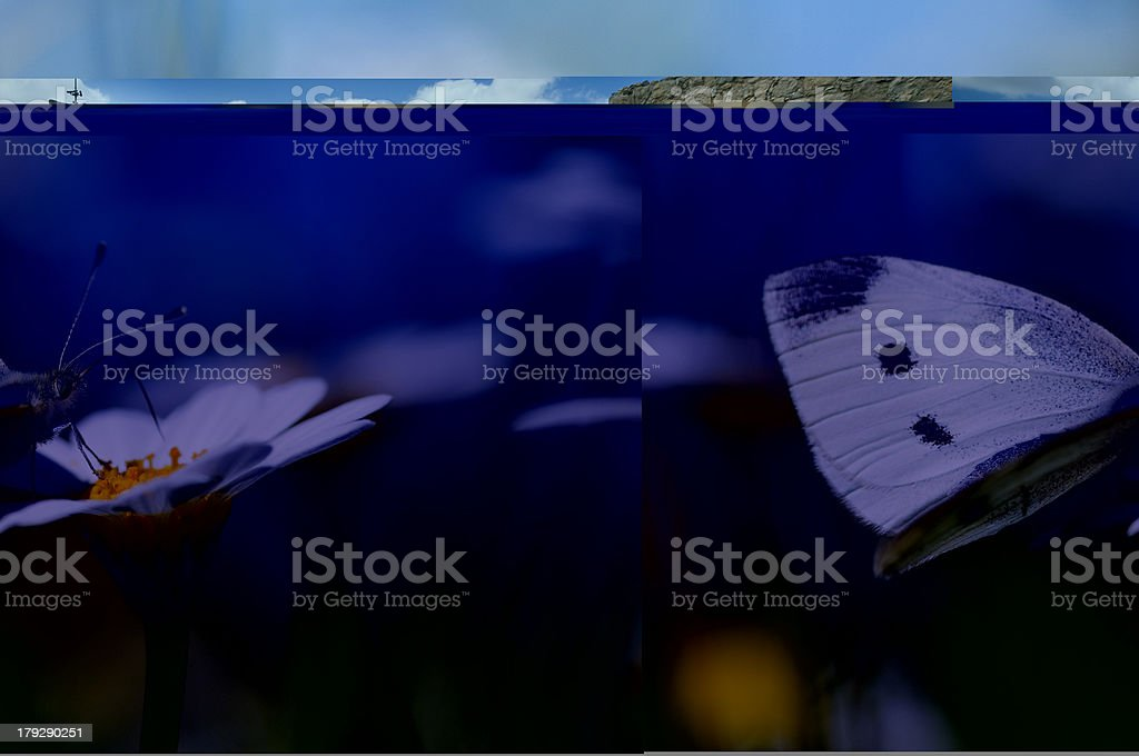 it's spring time royalty-free stock photo