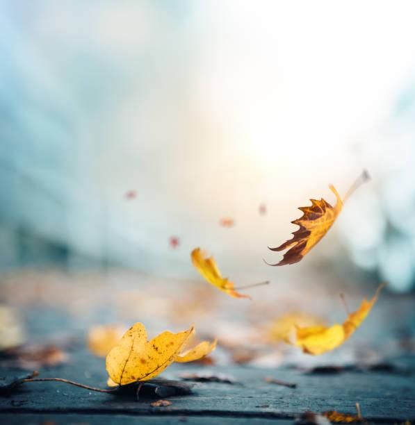 it's time for autumn - cadere foto e immagini stock