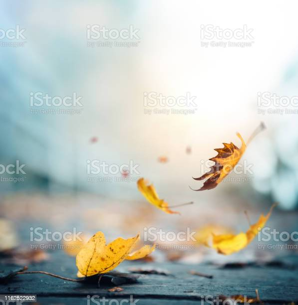 Photo of It's time for autumn
