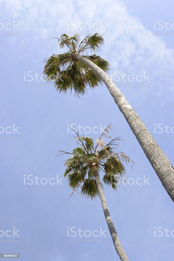 Il est Tropical photo libre de droits