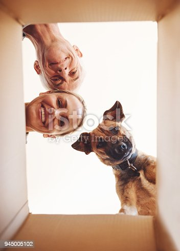 Low angle portrait of a happy couple and their dog looking into a box together