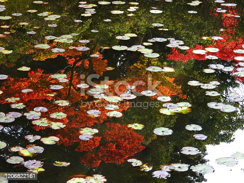 Autumn scene reflected in the pond