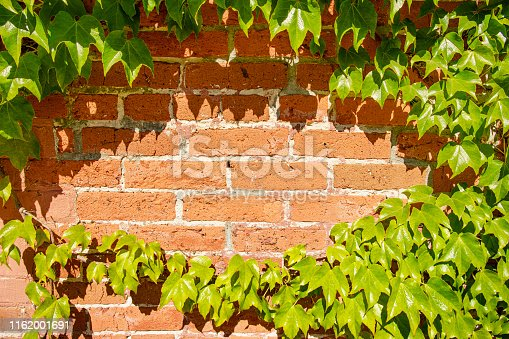 Ivy vines grow on a brick wall, image is useful as background with room for text.