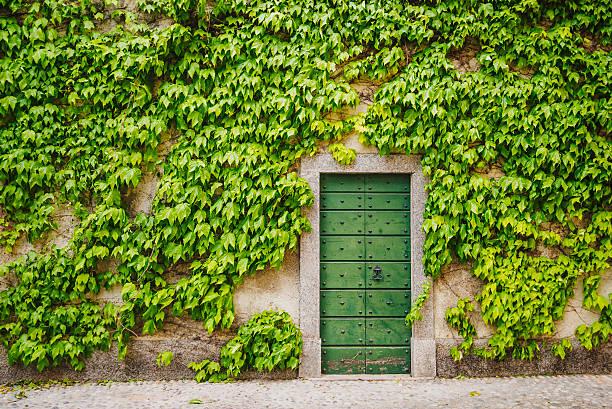 Ivy around wooden green gate picture id530580692?b=1&k=6&m=530580692&s=612x612&w=0&h=v5nyfpmhgimdijmi8ewujj7wwtznh1d6ymamxbwxxgg=