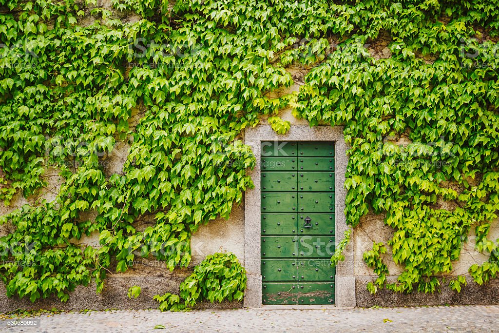 Ivy around wooden green gate stock photo
