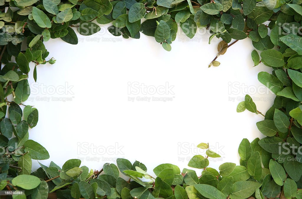 ivy border frame stock photo more pictures of arts culture and