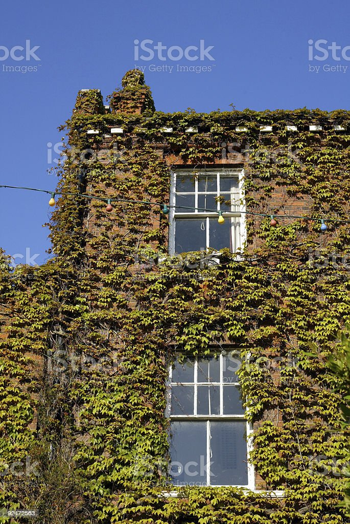 Ivy covered building royalty-free stock photo