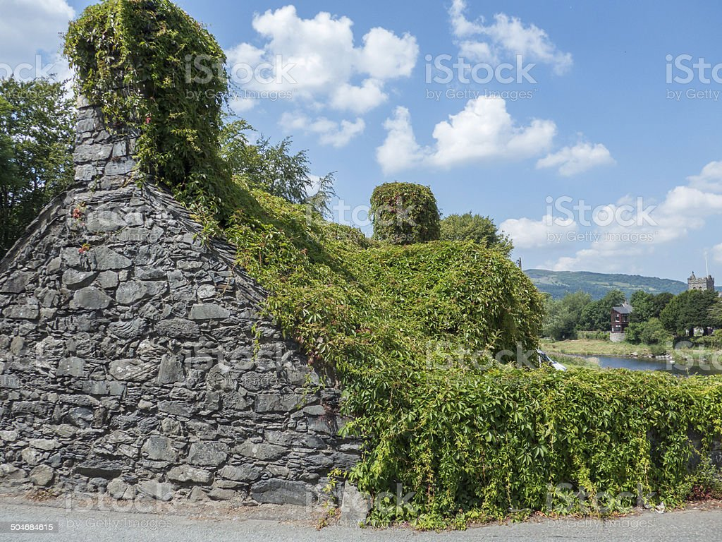 ivy covered cottage in wales stock photo