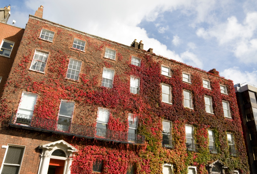 Ivy covered georgian style building in Dublin