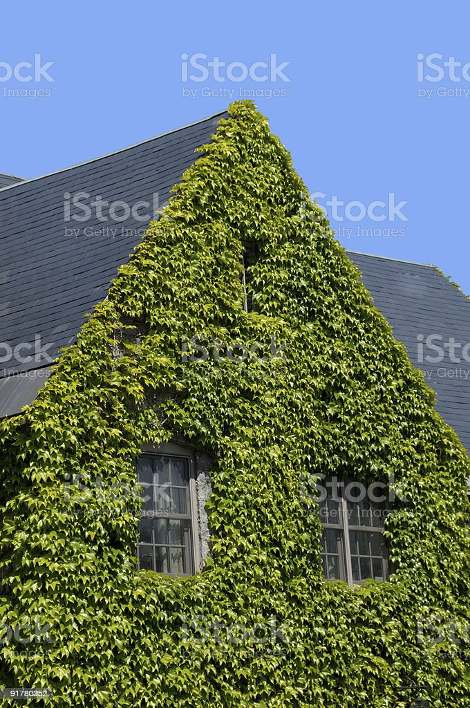 Ivy covered home stock photo