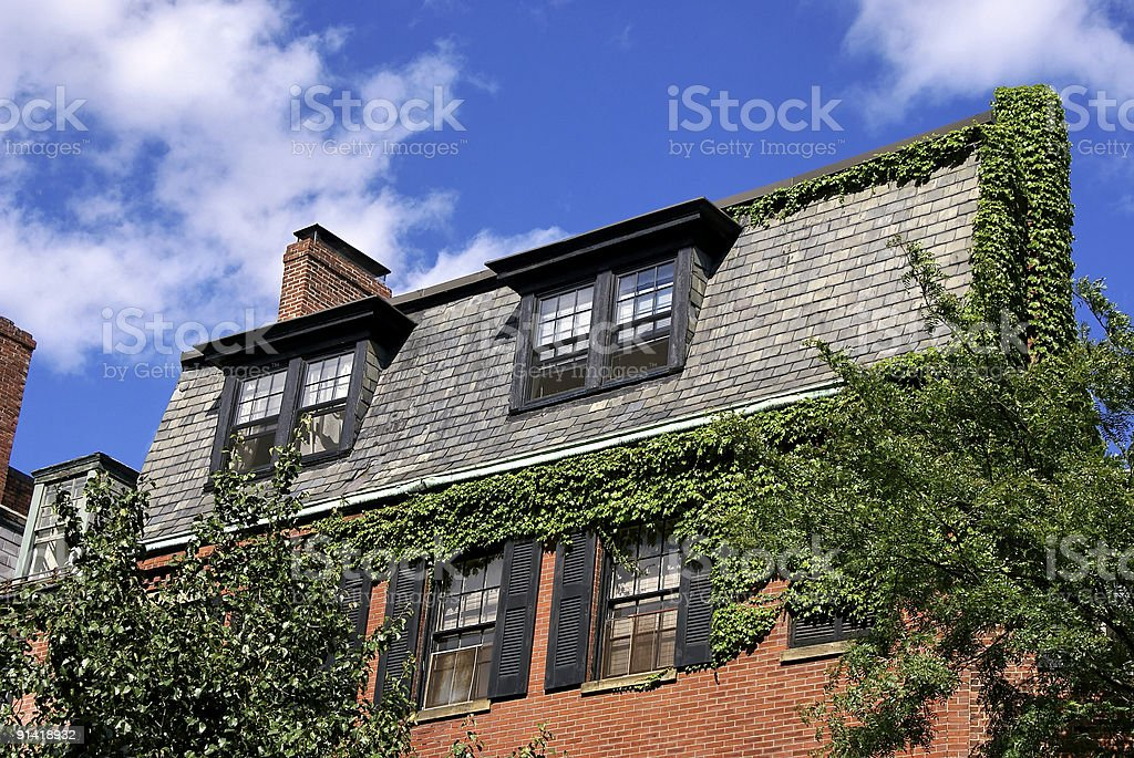 ivy covered house stock photo