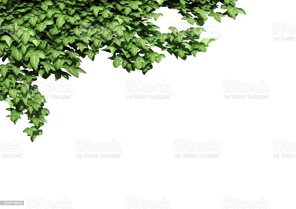 Efeu Rahmen 3 D Abbildung Stock-Fotografie und mehr Bilder von ...