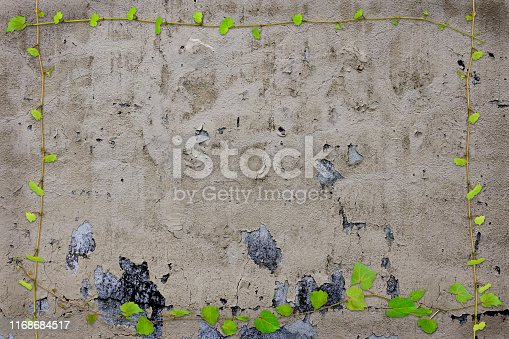 Ivy growing on dirty concrete wall with copy space.