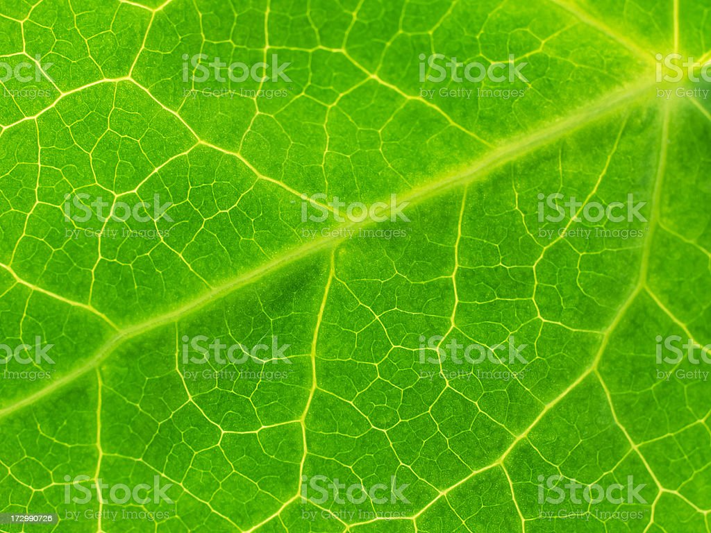 Ivy leaf royalty-free stock photo