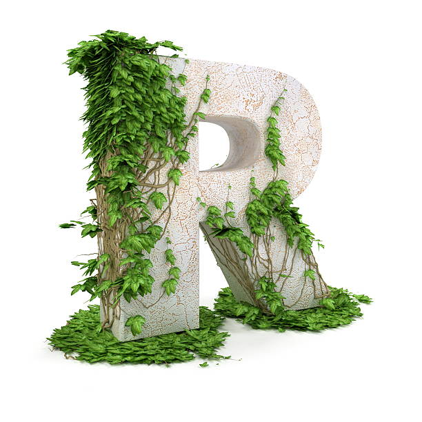 Ivy letter R isolated on white background. stock photo