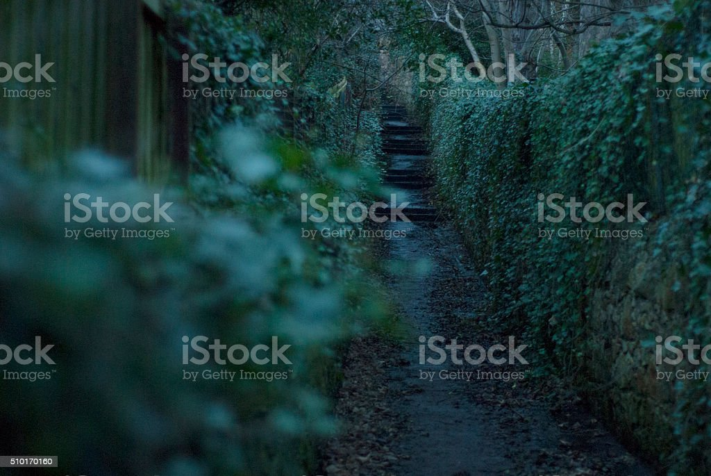 Ivy lined path stock photo