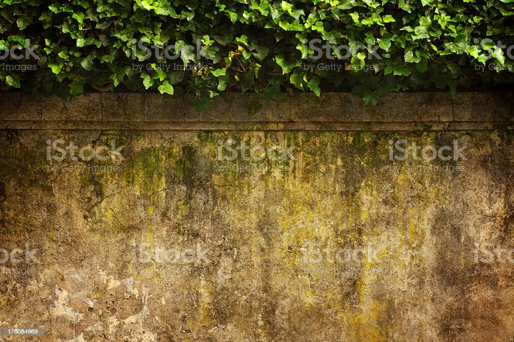 Ivy & Old Wall royalty-free stock photo